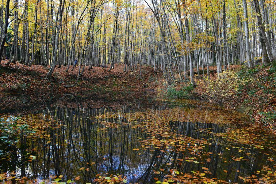 美人林 池に映して-1