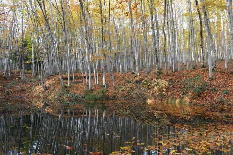 美人林 池に映して-2