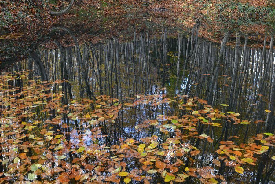 美人林 池に映して-3