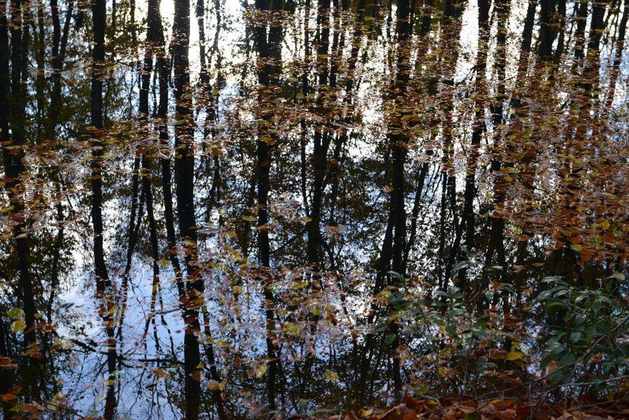 美人林 池に映して-4