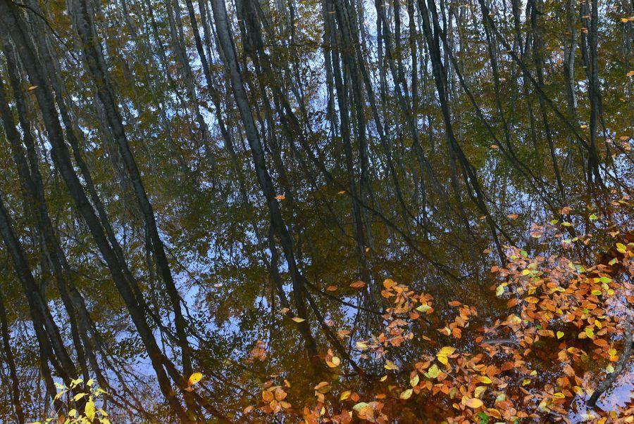美人林 池に映して-5