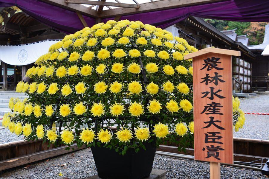 菊まつり-2