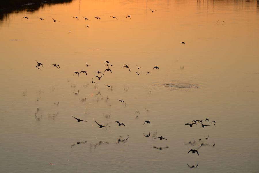 夕暮れの川面-3