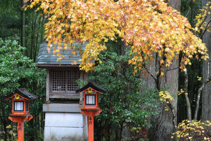 如法寺 雨の紅葉-4