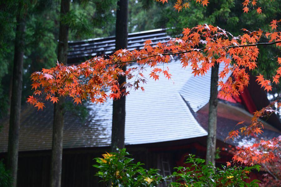 如法寺 雨の紅葉-5