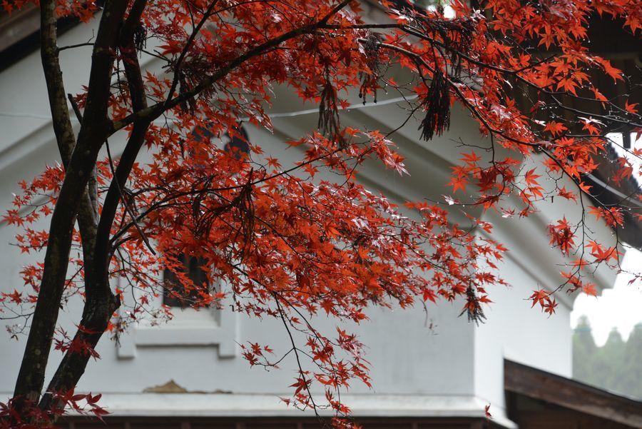 如法寺 雨の紅葉-7