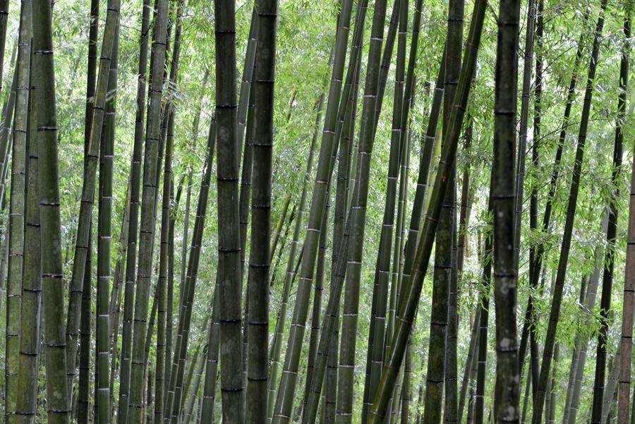 雨の竹林-2