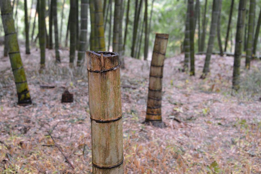 雨の竹林-7