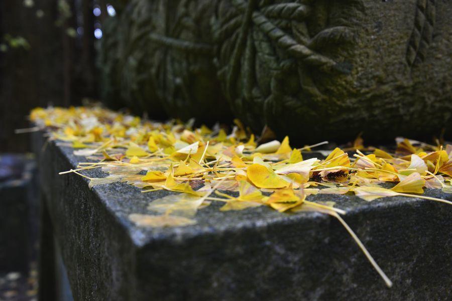 銀杏の落ち葉-4