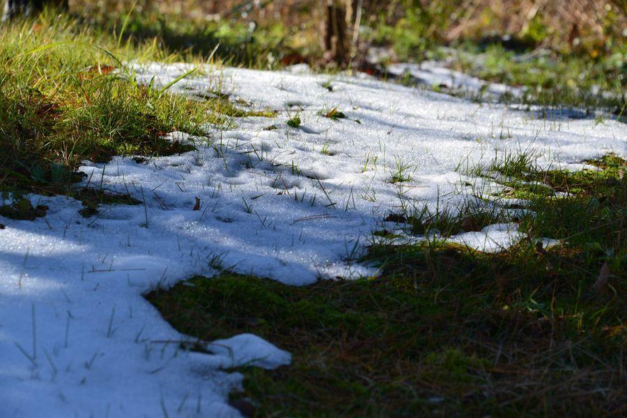 初雪の跡-1