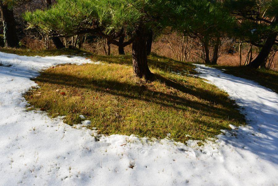 初雪の跡-4