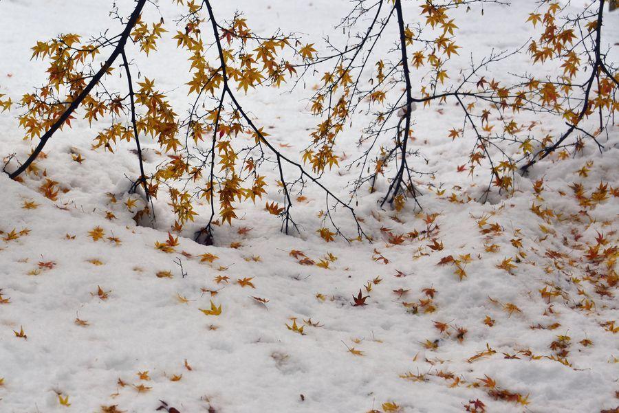 雪に葉-2