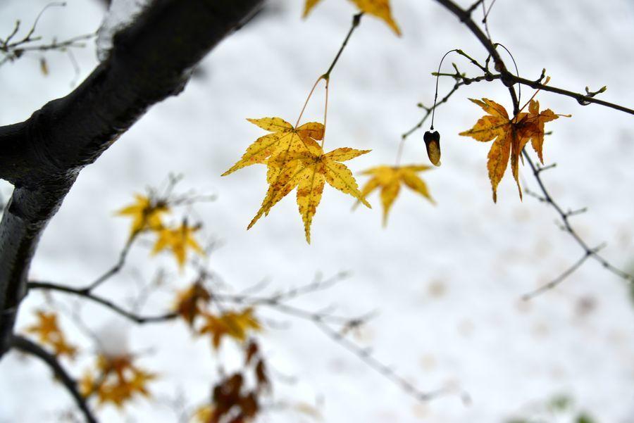 雪に葉-3