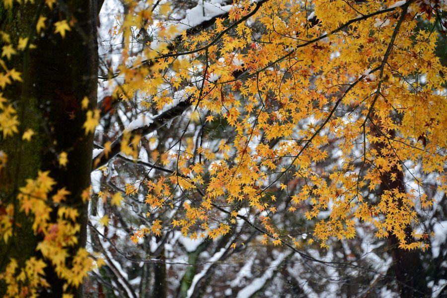 雪に葉-5