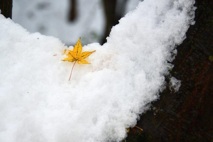 雪に葉-6