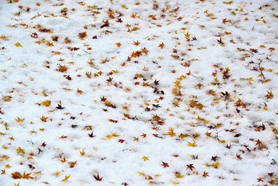 雪に葉-7