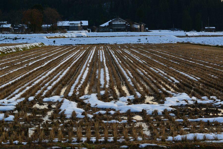 雪の粟ヶ岳と田-4