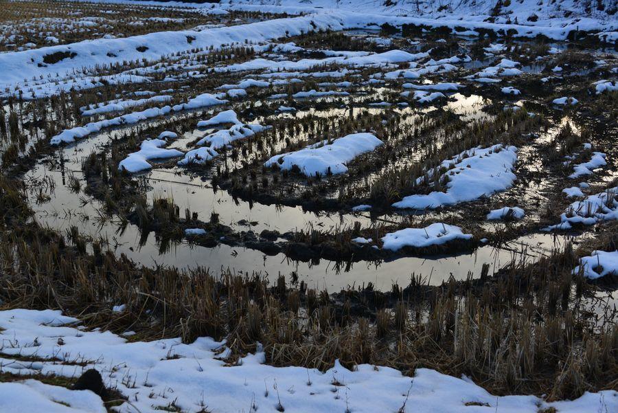 雪の粟ヶ岳と田-5