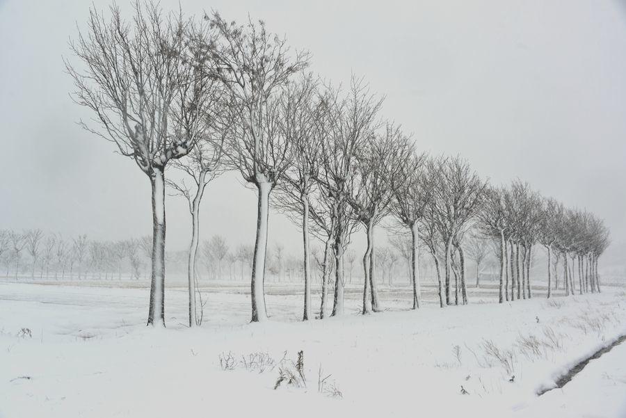 吹雪のはざ木-7