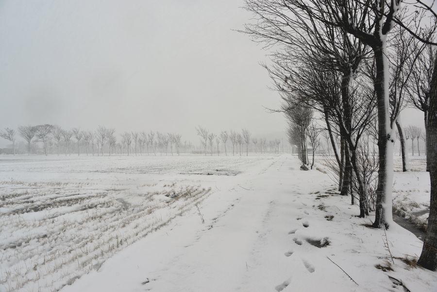 吹雪の中で-6