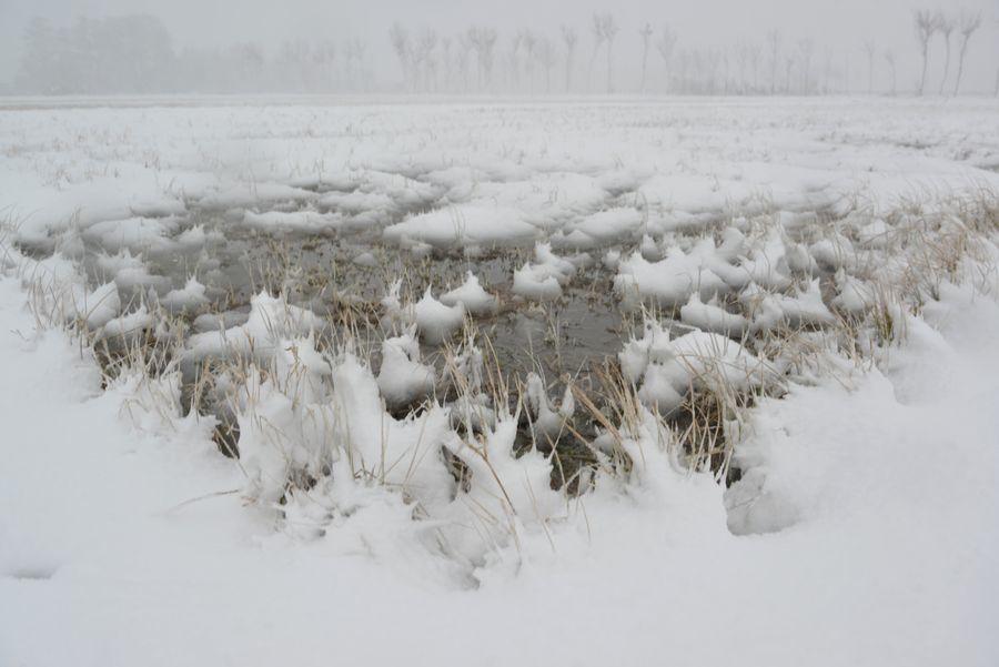 雪の水田-2