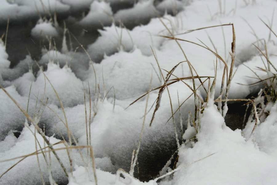 雪の水田-4
