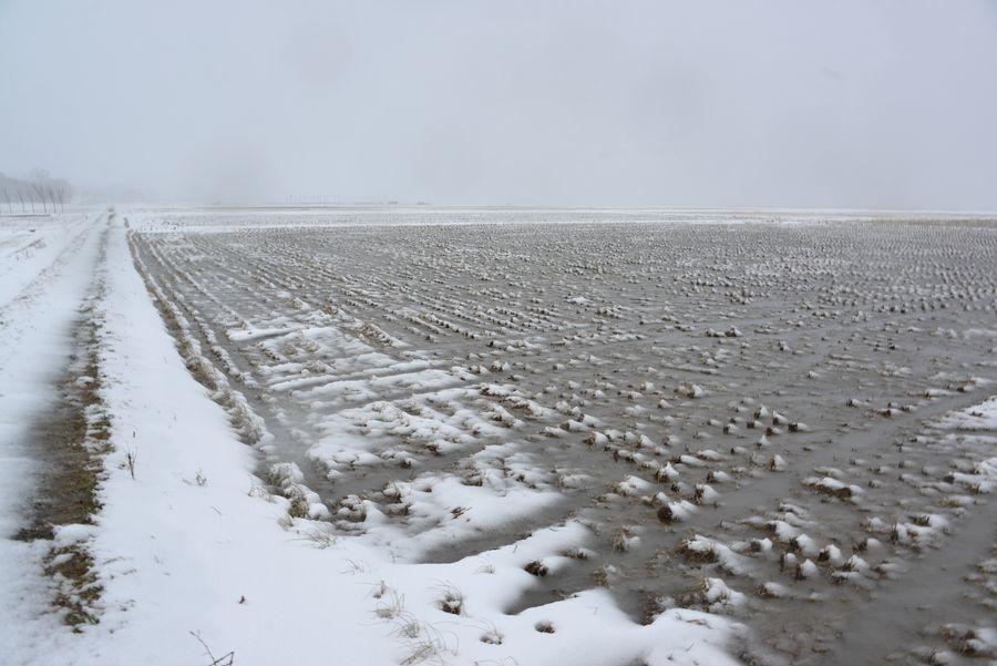 雪の水田-5