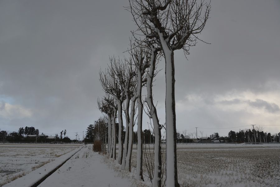 雪のはざ木-6