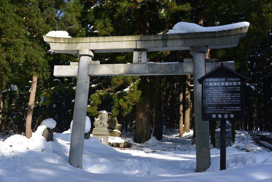 八海神社杉並木-1