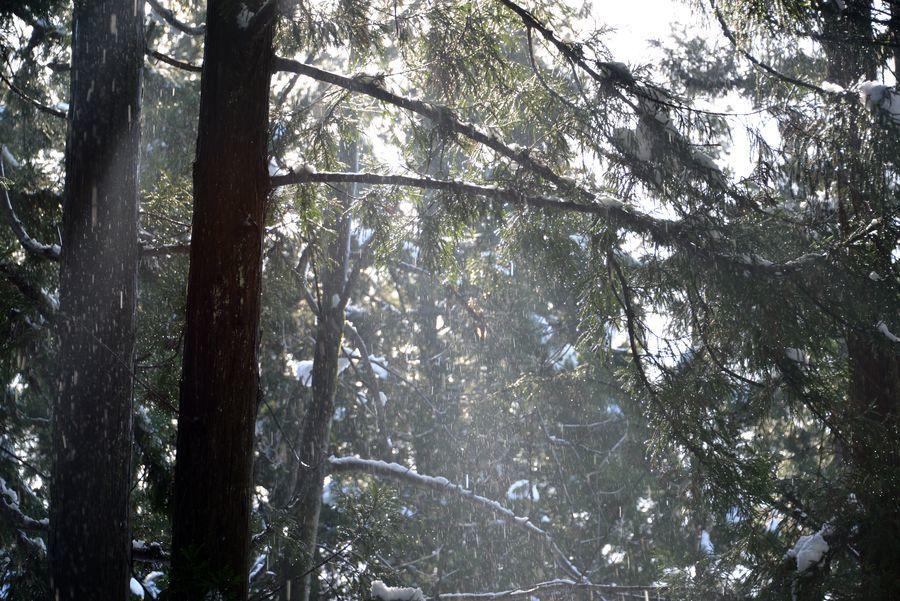 八海神社杉並木-5