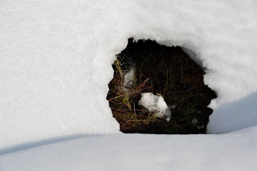 雪帽子と水-6