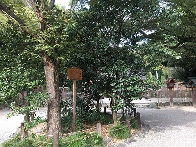 171108 太郎庵椿(たろうあんつばき)