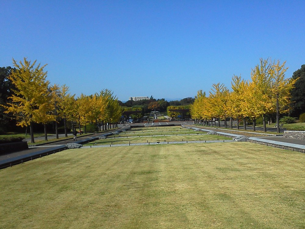 F1000051昭和記念公園10月26日立川口前イチョウ並木