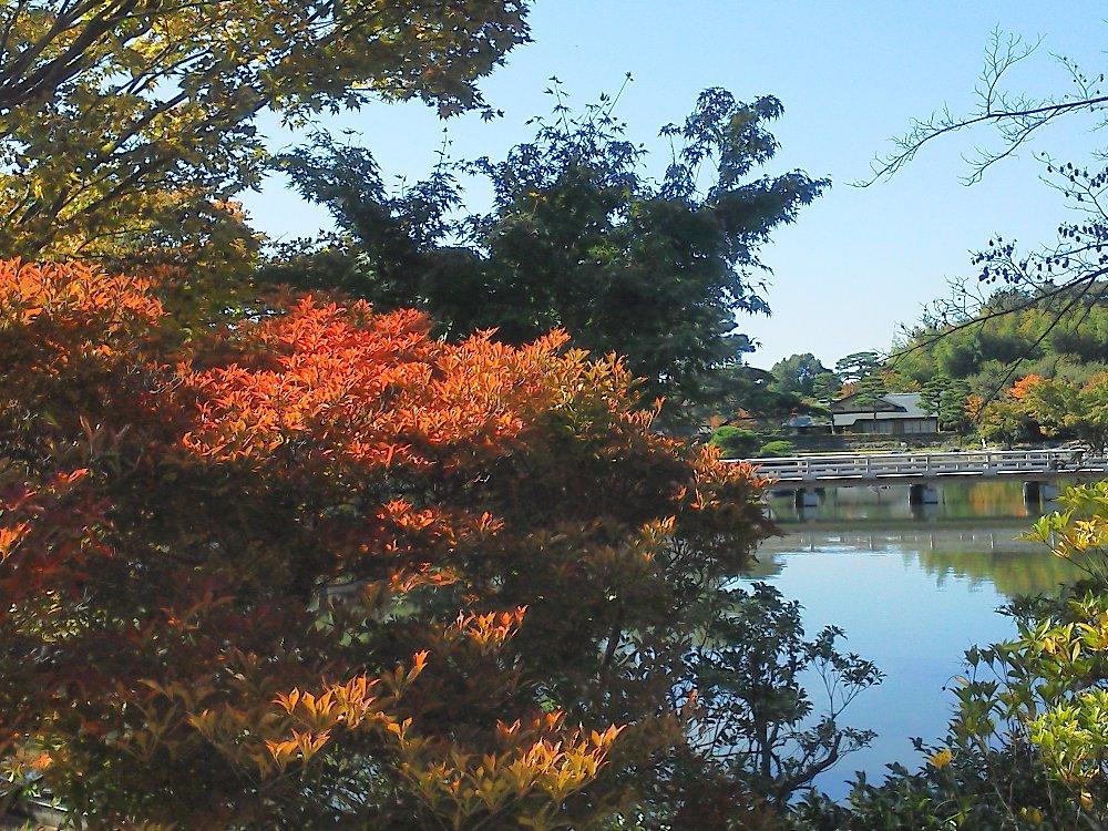 F1000061昭和記念公園10月26日日本庭園