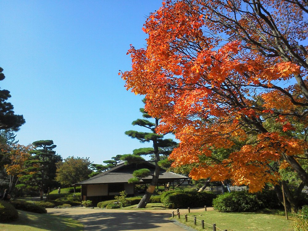 F1000062昭和記念公園10月26日日本庭園