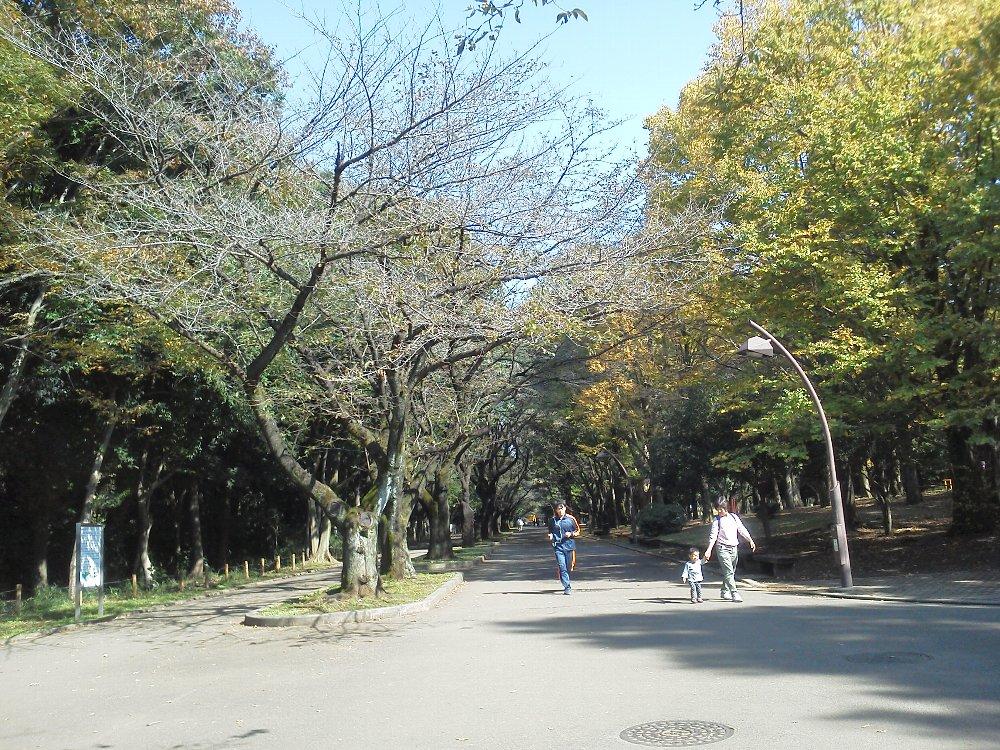 F1000101光が丘公園10月27日桜並木