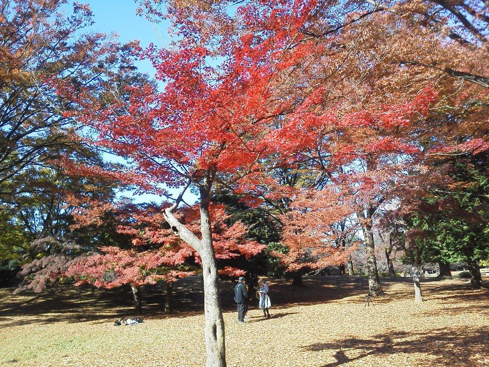 F1000212光が丘公園11月16日
