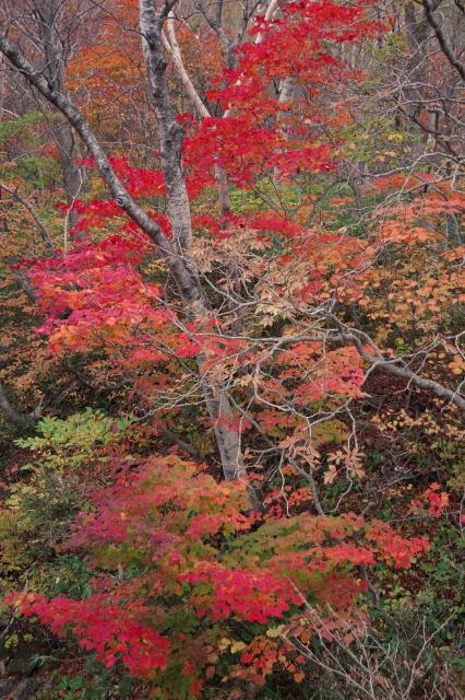 不動沢の紅葉