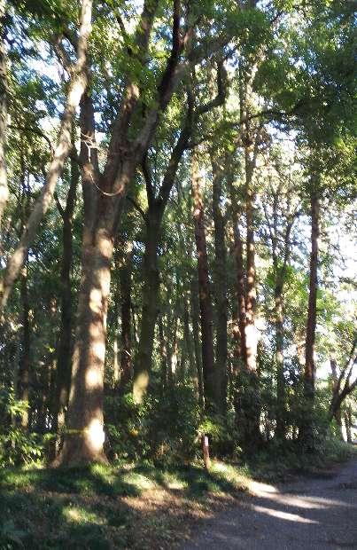悠久の森2