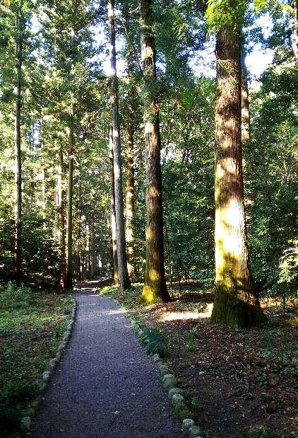 悠久の森1