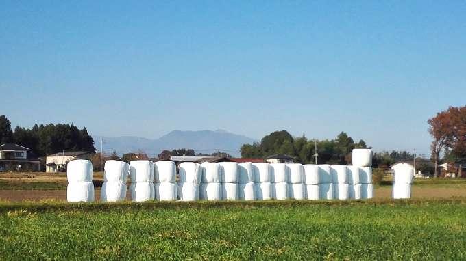 牧草地から茶臼岳遠望