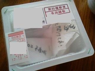 171214美果さんから苗