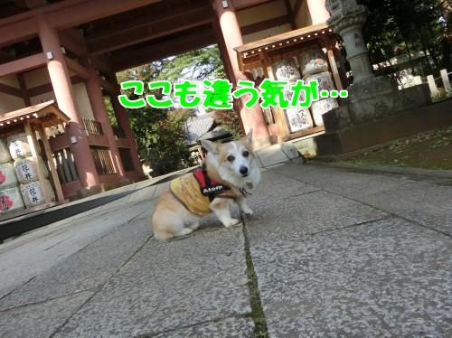 20171103130451fd1.jpg
