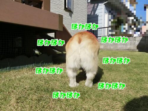201711061356159de.jpg