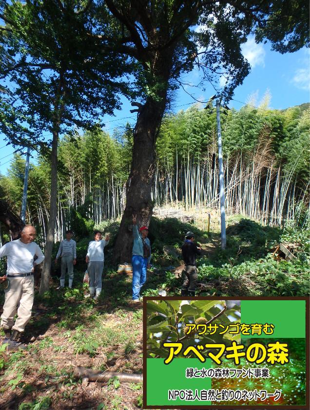 アベマキの森