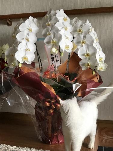 2017日展お花01