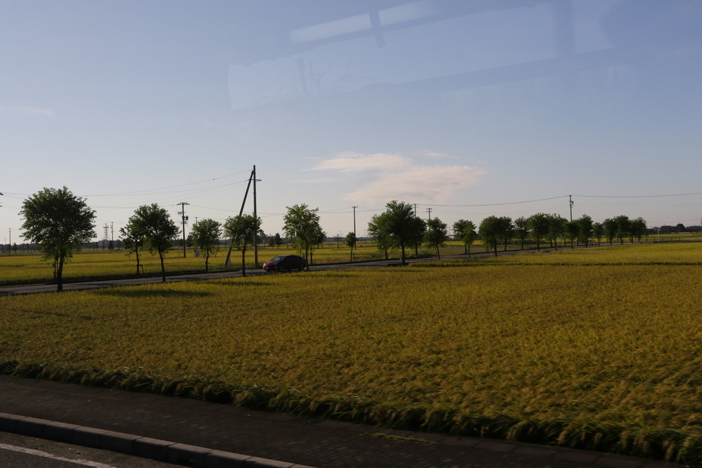 途中の田んぼ