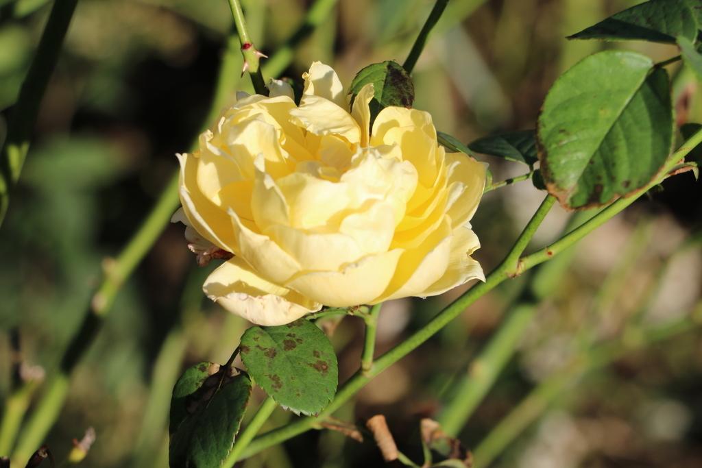 薔薇園_2