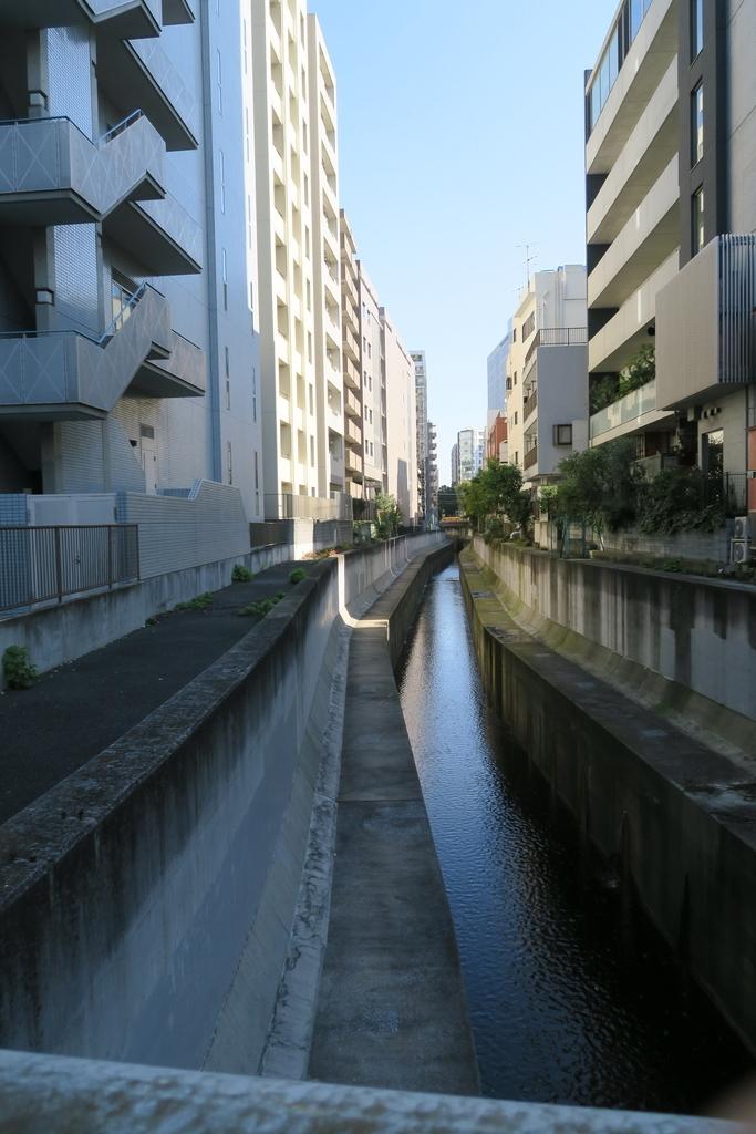 渋谷橋、渋谷川、冬桜_4