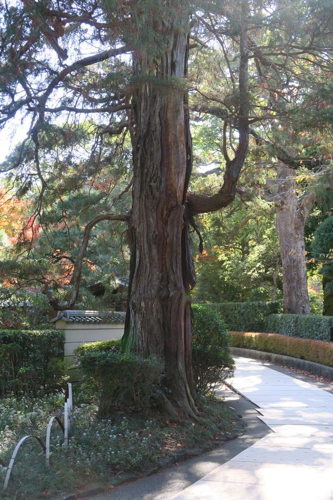 樹形の見事な木々_3